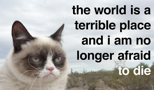 terrible,unafraid,life,Death,Memes,grumpy,Grumpy Cat,tard