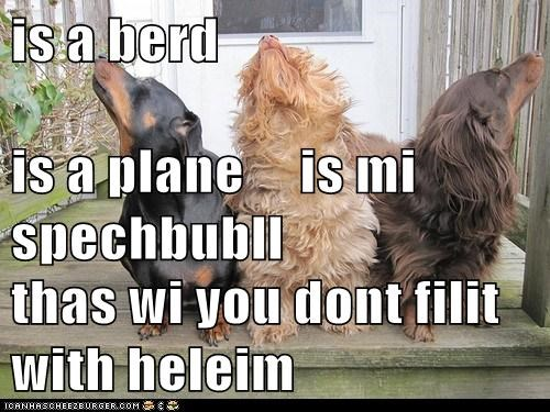 is a berd  is a plane     is mi spechbubll thas wi you dont filit with heleim