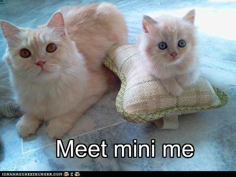Meet mini me.