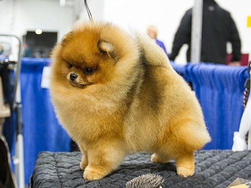 dogs,people pets,around the interwebs,national dog show