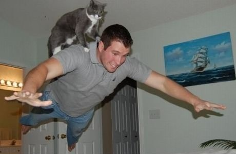 cat,i must go my planet needs me,flying