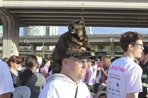 Oh, HAT! I Thought You Said CAT!