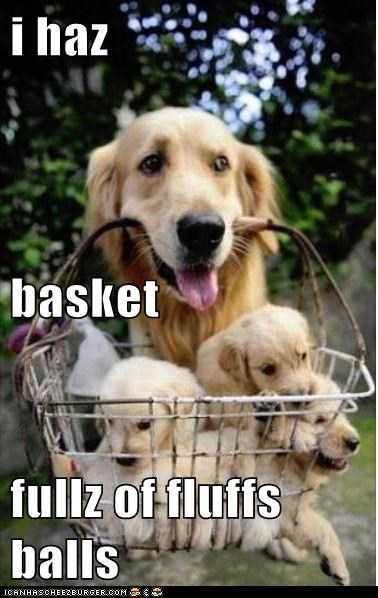 i haz basket  fullz of fluffs balls