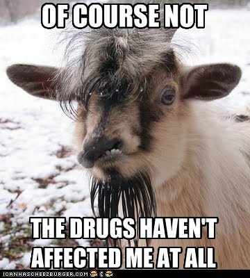 crazy,drugs,goats,messed up,of course not