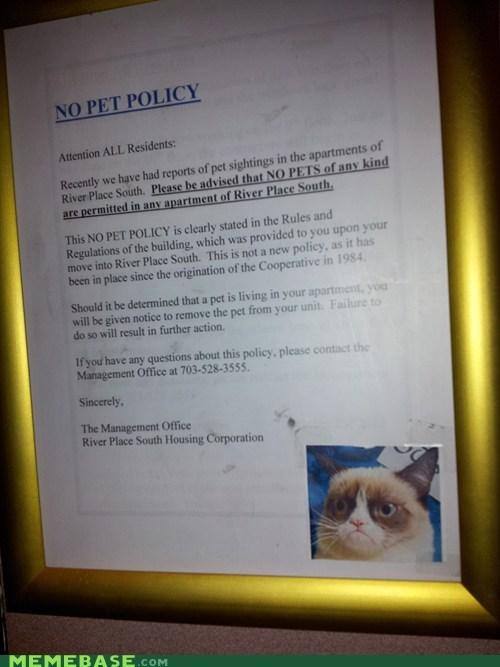 sign,pets,IRL,Grumpy Cat