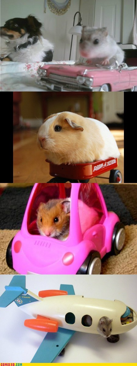 Parade news- the Gerbils on Wheels contingent was arrived