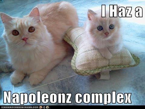 I Haz a  Napoleonz complex