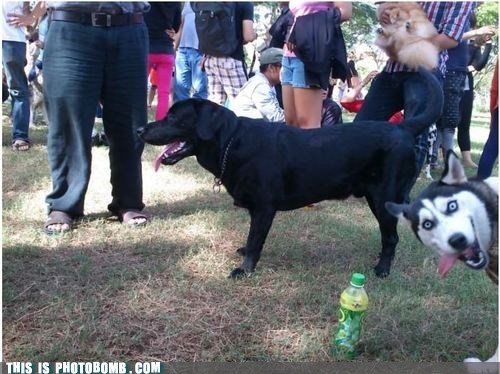 This Dog is Doing it Right