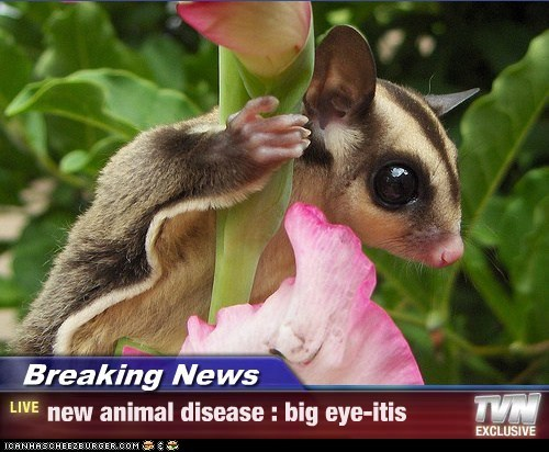 Breaking News - new animal disease : big eye-itis