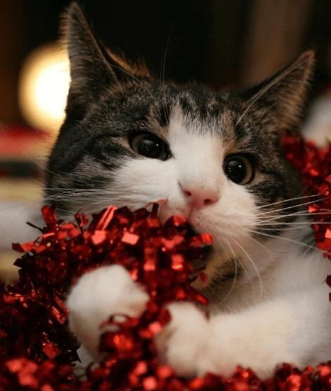 The 25 Days of Catmas: Om Nom Garland Nom