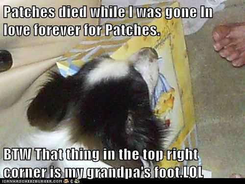 Patches died while I was gone In love forever for Patches.  BTW That thing in the top right corner is my grandpa's foot.LOL