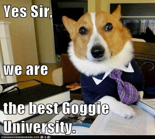 Yes Sir, we are  the best Goggie University.