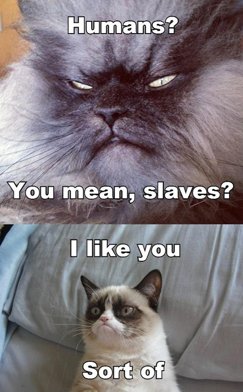 Sinister Cat and Grumpy Cat: A Friend at Last?