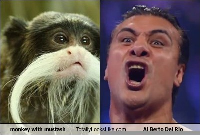 monkey with mustash Totally Looks Like Al Berto Del Rio