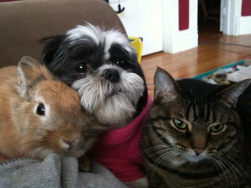 dogs,Interspecies Love,family,rabbit,Cats,bunny