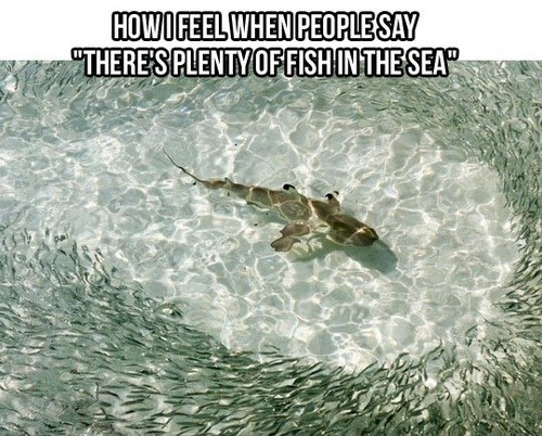how i feel,fish,plenty of fish in the sea,dating fails,g rated