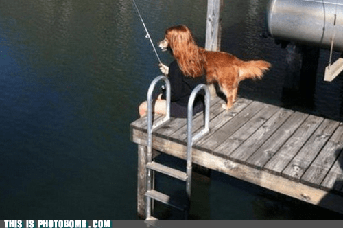 dogs,fishing,Perfect Timing,animals