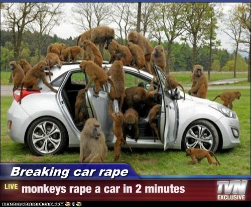 Breaking car rape - monkeys rape a car in 2 minutes