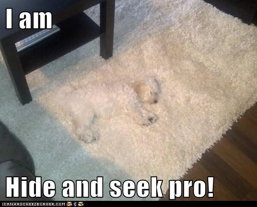 I am  Hide and seek pro!