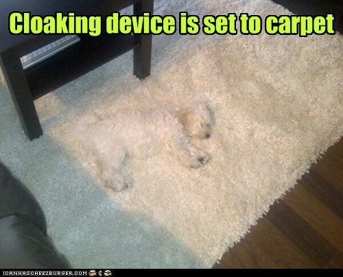 Cloaking device is set to carpet