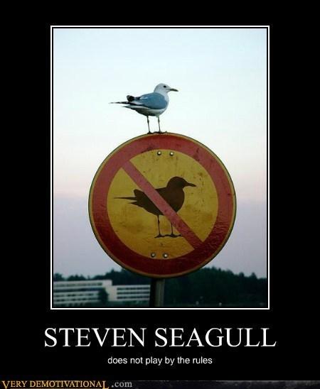 seagulls,Steven Segal,breaking the rules