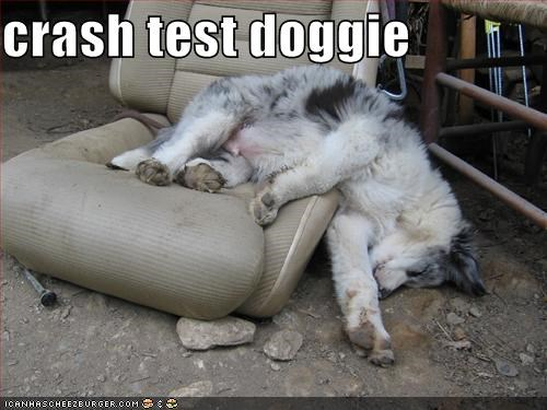 crash test doggie