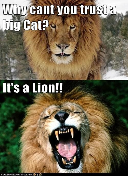 Why cant you trust a big Cat? It's a Lion!!