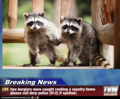 Breaking News - two burglars were caught roobing a country home please call derp police (912) if spotted.