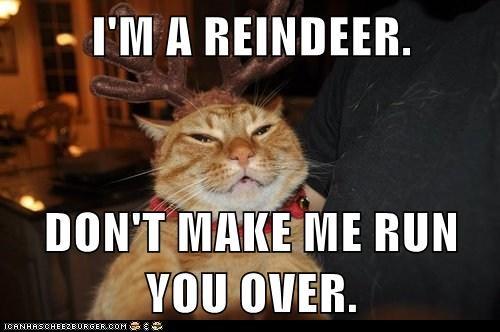 I'M A REINDEER.  DON'T MAKE ME RUN YOU OVER.