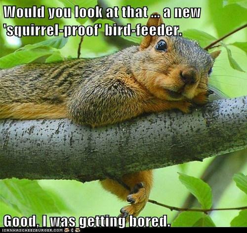 squirrels,bird feeder,challenge,bored,look at that
