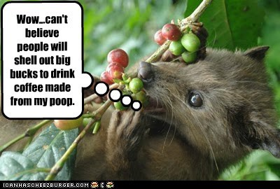 coffee beans,WoW,poop,civets,expensive