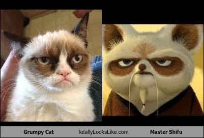 Grumpy Cat Totally Looks Like Master Shifu