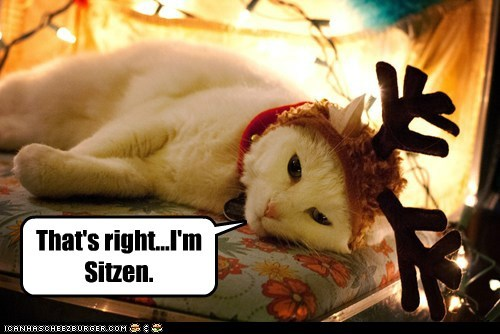 christmas,reindeer,lazy,12 days of catmas,captions,Cats,catmas