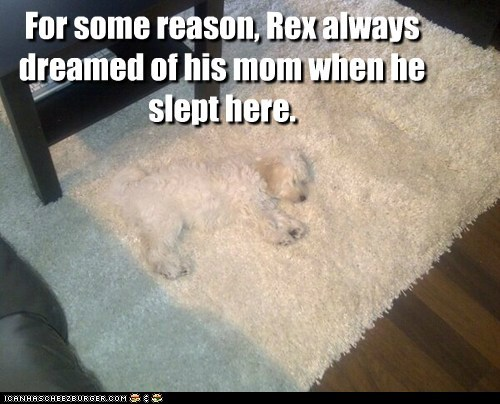 For some reason, Rex always dreamed of his mom when he slept here.