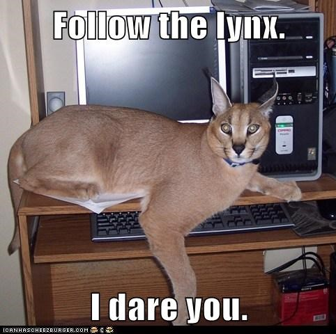 Follow the lynx.  I dare you.