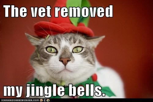 The vet removed  my jingle bells.