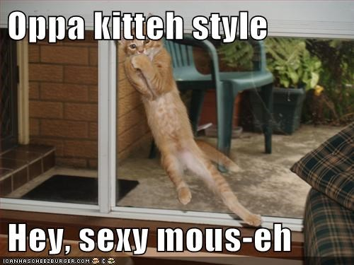 Oppa kitteh style  Hey, sexy mous-eh