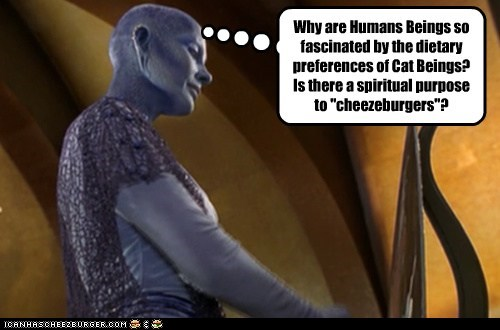 cheezburger,rowan woods,fascinated,farscape,confused,zotoh zhaan,Cats