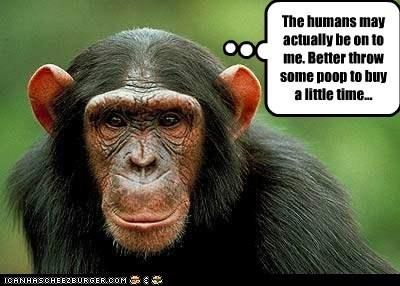 time,throwing poop,humans,plans,chimpanzees
