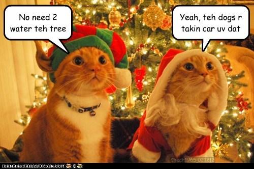 christmas,12 days of catmas,holiday,catmas
