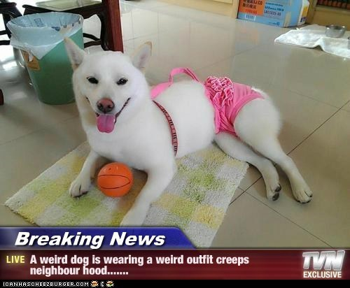 Breaking News - A weird dog is wearing a weird outfit creeps neighbour hood.......