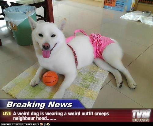 Breaking News - A weird dog is wearing a weird outfit creeps neighbour hood.......
