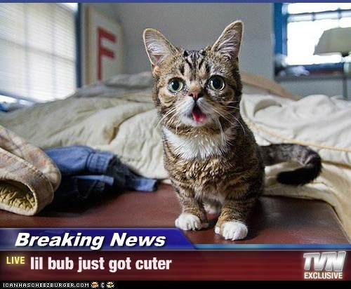 Breaking News - lil bub just got cuter