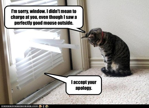 I'm sorry, window. I didn't mean to charge at you, even though I saw a perfectly good mouse outside.