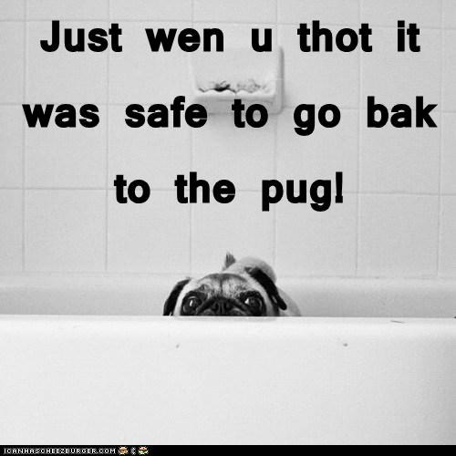 Just wen u thot it was safe to go bak to the pug!