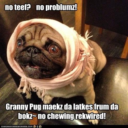 dogs,pug,head scarf,no teeth,grandma,latkes