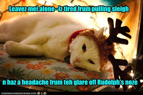 Kitteh-deer haz had it