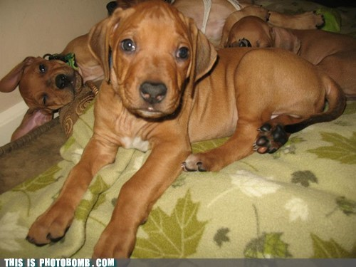 dogs,puppies,cute,animals