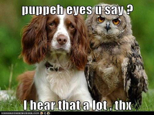 puppeh eyes u say ?  I hear that a lot , thx
