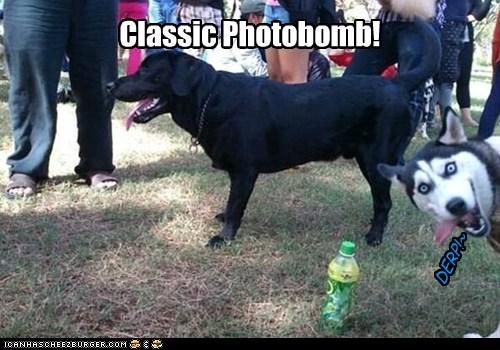 Classic Photobomb!